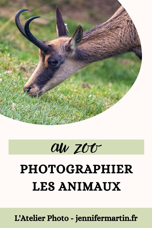 Photographier les animaux au zoo