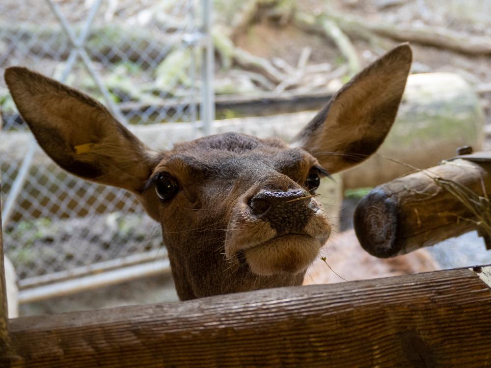 Zoo des Marécottes - août 2021